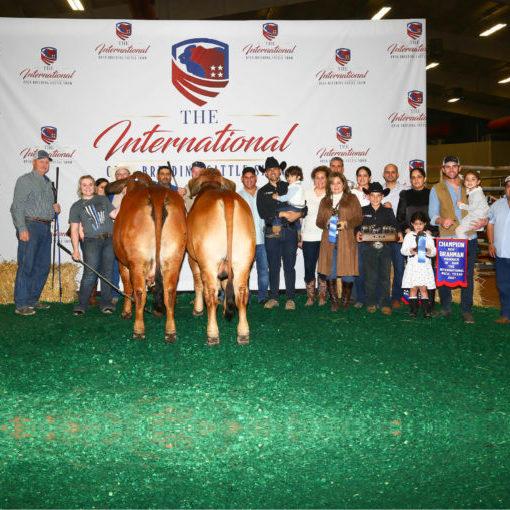 Swaner Brahmans International Breeding Cattle Show Champion